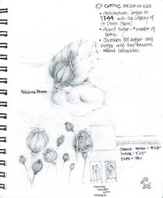 Journal page, Gone to Seed series, pod sketches