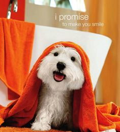 I promise to make you smile!
