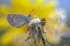 Butterfly among the flowers by Roberto Aldrovandi