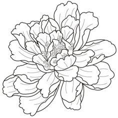 牡丹花画法。