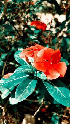 Periwinkle Flowers, Plant Leaves, Nature, Plants, Naturaleza, Plant, Nature Illustration, Off Grid, Planets