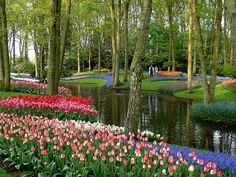 photo by twiga_swala on Flickr.  Keukenhof also known as the Garden of Europe, is situated near Lisse, Netherlands, and is the world's largest flower garden. Approximately 7,000,000 flower bulbs are planted annually in the park, which covers an area of 32 hectares. The best time to view the tulips is around mid-April, depending on the weather.