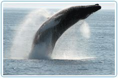 there is a sunset whale watching tour, a whale/puffins/ lighthouse tour, and a lighthouse/islands park tour.