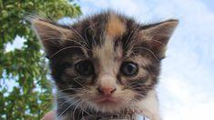 Animalli.com - Sad Cats Kittens Big Cat Hd Images