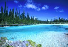 """""""南太平洋の楽園""""ニューカレドニアにある島の中でも、特に美しいとされるのが「イルデパン島」。透明度の高い海、真っ白なパウダーサンド、緑の南洋杉のコントラストがなんとも綺麗な場所です。"""