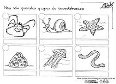 Imprimibles invertebrados Science Fair, Science And Nature, Skinny Fit Suits, Spanish Teaching Resources, Science Worksheets, Free Hd Wallpapers, Free Coloring Pages, Colorful Pictures, Christmas Lights