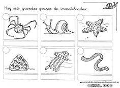 Imprimibles invertebrados