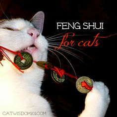 Win-big-prizes-cats-coins-LOl-feng shui