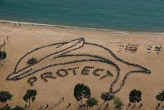 800 children from HongKong made this figure to protest against dolphin slaughter. Silent but powerful.  www.flipopular.com