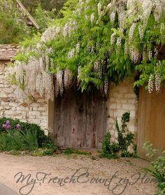 door and wisteria - perfect