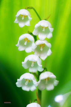 Die 312 Besten Bilder Von Spring Flowers Holiday Und Mother Nature