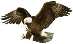 Illustration about Golden eagle landing hand draw on white background vector illustration. Illustration of hunter, paint, winged - 76902817 Phoenix Tattoo Design, Skull Tattoo Design, Dragon Tattoo Designs, Eagle Images, Eagle Pictures, Iphone Background Images, Black Background Images, Eagle Wing Tattoos, Chest Piece Tattoos