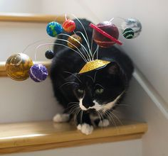 Are cats the center of your universe too? Give them a hint with a little help from one of these solar system cat fascinators!