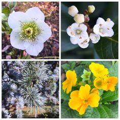 Four beautiful images of nature at its best, Photo taken by me today at Saltwell Park in Gateshead.