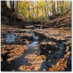Trademark Fine Art Late Autumn Falls Canvas Art by Kurt Shaffer, Size: 24 x 24, Multicolor