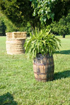 Country Wedding Decor- Whiskey Barrel with Fern