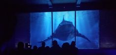 SHARK ATTACK Many may think that Steven Spielberg's JAWS blockbuster presented the largest shark ever and they have been slighlty misled. Slightly meaning that the largest shark you will ever …