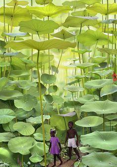 Lueur derrière la végétation