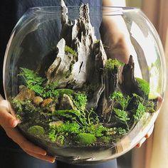 Best Indoor Garden Ideas for 2020 - Modern Terrarium Scene, Terrarium Plants, Succulent Terrarium, Succulents Garden, Fairy Terrarium, Terrarium Ideas, Water Terrarium, Bottle Garden, Glass Garden