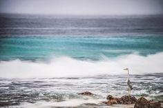 Der Reiher blieb während der Langzeitaufnahme ruhig stehen wodurch die Spannung zwischen dem unruhigen Meer und dem Vogel interessant wird. Foto: @janick.entremont #geotakeover by geomagazin