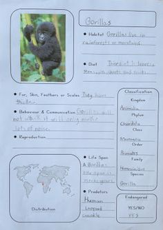 M is for Monkey - Printable Animal Notebooking Pages (blank template to use with any animal!)