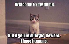 Cheeky kitty!