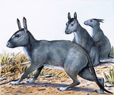 Art illustration - Prehistoric Mammals - Protypotherium: is an extinct genus of placental mammals interatheriidae family, suborder typotheria. They lived from the Paleocene to Miocene. They are the size of a modern rabbit, but its tail and legs were long and the head was as rat. Had 44 teeth, The neck was short and the body was long and had a long, thick tail.