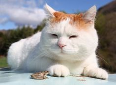 'Zen Cat' Shironeko Can Teach Us A Thing Or Two About Happiness