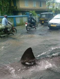 "There's always a chance it's a fake like the famous ""Hurricane Irene/Puerto Rico street shark""  but the story is that the floods in Thailand brought Bull sharks in from the harbors and up local streets, creating a hazard for pedestrians - you decide!"