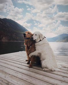 awwww-cute: Posing for a beautiful shot by the lake (Source: http://ift.tt/2zZKHRC)