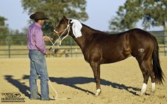 Exercise #26: Desensitizing to Plastic Bags  Goal: To be able to rub, wave and flap a plastic bag all over and around the colt's body with high energy while he stands still and relaxes.  https://www.downunderhorsemanship.com/Store/Product/MEDIA/D/2896/