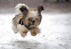 doggie in snow