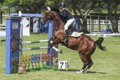 Horse jumping Show Jumping, Ponies, Equestrian, Spring, Photography, Travel, Animals, Ideas, Photograph