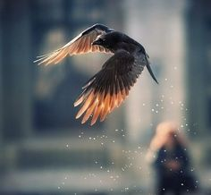 volare..