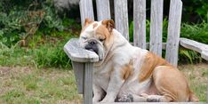 Years ago, when I first starting talking about the concept of our pets suffering from midlife crises, people accused me of taking pet psychology way too far. Overweight Dog, Sleeping Too Much, Dog Sleeping, Happy Week End, Parcs, Dog Quotes, Dog Walking, Ancient Art, Super Funny