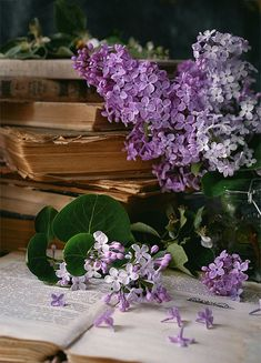 With Tenor, maker of GIF Keyboard, add popular Christmas Flowers animated GIFs to your conversations. Share the best GIFs now >>> Flowers Gif, Book Flowers, Lilac Flowers, Cinemagraph, Christmas Flowers, All Things Purple, Fruit Art, Book Photography, Belle Photo