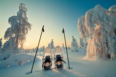 Lapland Top 10 Tours & Activities (with Photos) - Things to Do in Lapland, Finland Lappland, Winter Szenen, Finland Travel, Lapland Finland, City Landscape, Alaska, Things To Do, Stuff To Do, National Parks