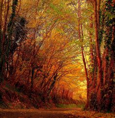 Beautiful photograph by Marco 11/19/07. Love the sense of quietness in an autumn woods! <pin by Debby Harriettha on Autumn>