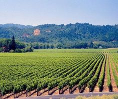 San Francisco's up-and-coming cruise port is a perfect starting point for a trip to Napa Valley. Take a three-hour train ride through #California's best vineyards.