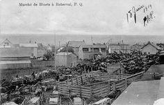 marché des bleuets, Roberval, lac Saint-Jean, carriole, cheval, enclos,
