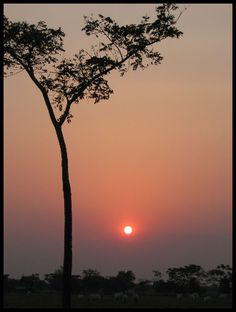 Sunset at the Eastrn plains in #Colombia. Visit our website: http://www.going2colombia.com/