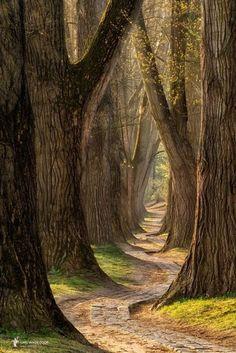 Passaggio ta alberi secokaru