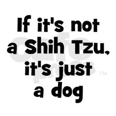 if it's not a shih tzu, it's just a dog