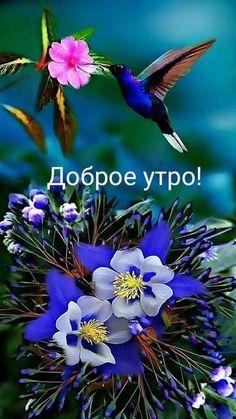 Good Morning Beautiful Pictures, Beautiful Nature Pictures, Good Morning Flowers, Morning Pictures, Good Morning Happy, Good Morning Wishes, Nature Images, Good Morning Images, Beautiful Landscapes