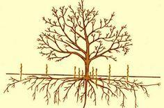 Как избавиться от поросли вишни на участке народными средствами