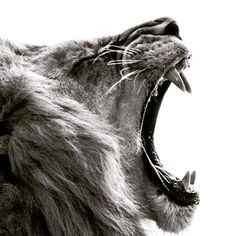 Fight for what you believe/ Pelea siempre por lo que tú creas que vale la pena !!!  #fight #motto #strong #nature #life #instalike #instagram #fun #fact #lion #like4like #tagsforlikes #likesforlikes  #2k15 #follow