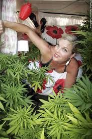 Image result for girl and weed Cannabis, Weed, Pin Up, Herbs, Image, Pinup, Herb, Ganja, Spice