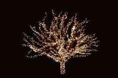 Use outdoor Christmas lights to decorate your home and yard. Here we have some Christmas light decorating ideas and examples. Christmas Tree Outside, Christmas Tree Branches, Alternative Christmas Tree, Merry Christmas To All, Outdoor Christmas, All Things Christmas, Christmas Home, White Christmas, Hanging Christmas Lights