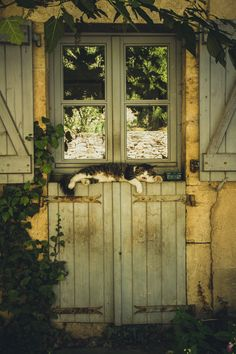 ♥ Cat in =^-^= the Window ♥