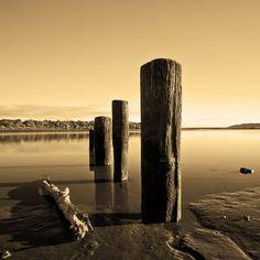 Piles sit in the estuary (sepia), Waikanae Beach, Kapiti Coast, North Island, New Zealand. Kiwiana, New Zealand, New York Skyline, Coast, Backyard, Earth, Island, Gallery, Travel